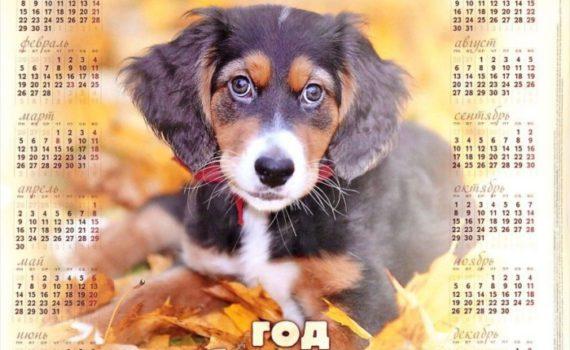 Красивые календари на 2018 год с изображениями собаки