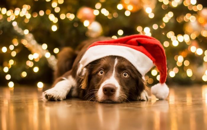 Идеи новогоднего декора на год Собаки