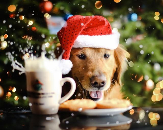 Что нельзя готовить на Новый год 2018 (год Собаки)
