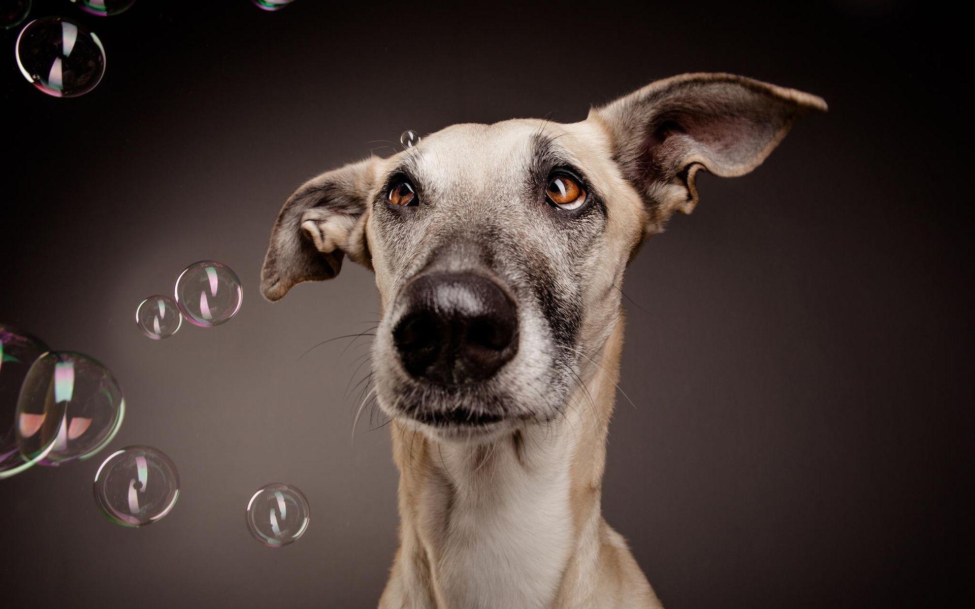 дилерскую смешные обои на рабочий стол с собаками многие