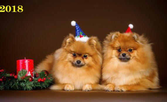 Новогодние обои на рабочий стол 2018 - Собаки