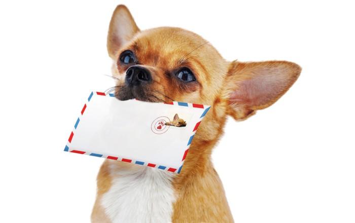 Лучшие новогодние открытки на год Собаки 2018