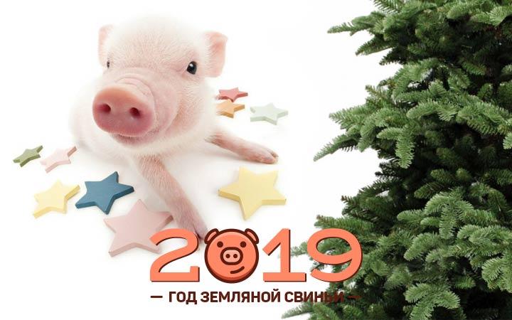Новые поздравительные открытки с годом Свиньи
