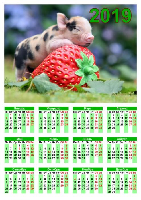 Красивые настенные календари со свинками на 2019 год