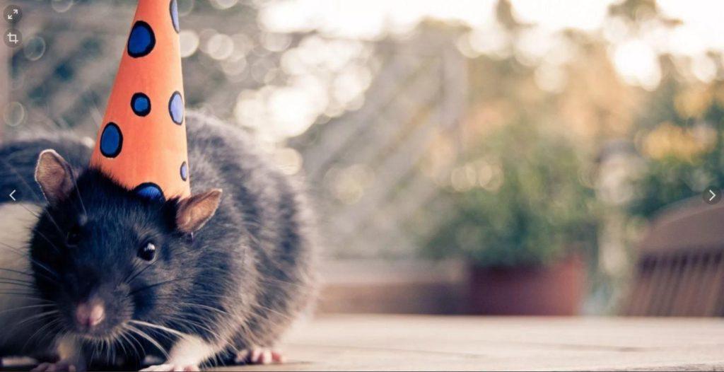 Красивые обои с мышами на рабочий стол