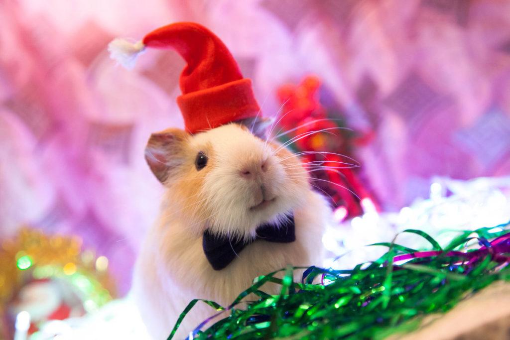 Новогодние обои на рабочий стол с мышками и крысами