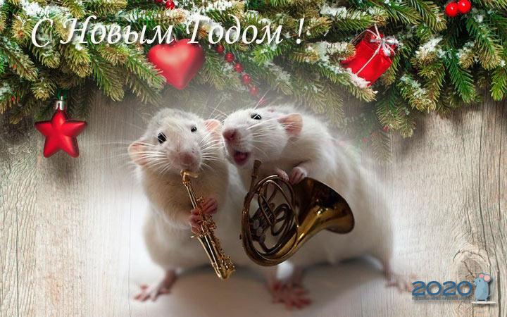 Прикольные открытки с крысами на Новый год
