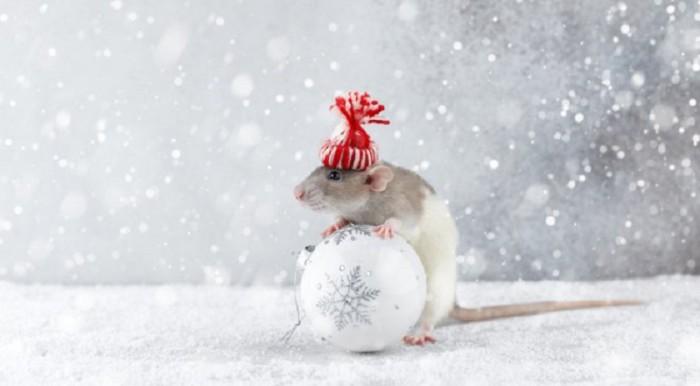 Бесплатные картинки с мышами на Новый год