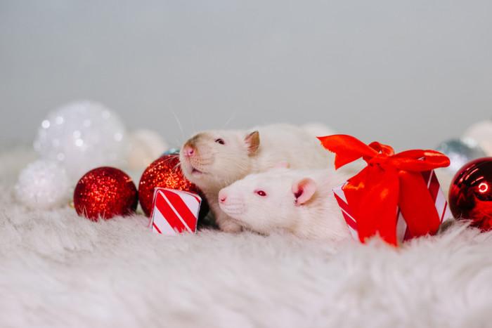 Интересные картинки на год Крысы