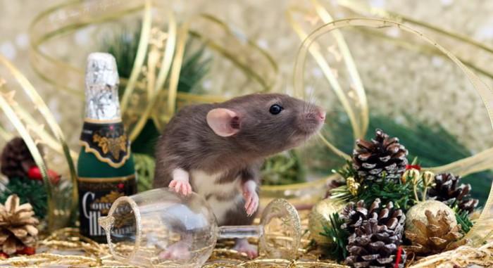 Оригинальные картинки с новогодними мышками и крысами