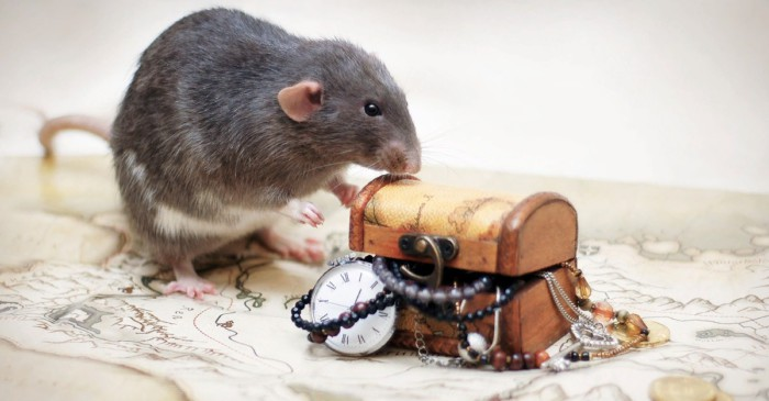 Новогодние картинки год Крысы