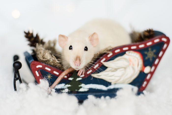 Новогодние картинки на год Крысы