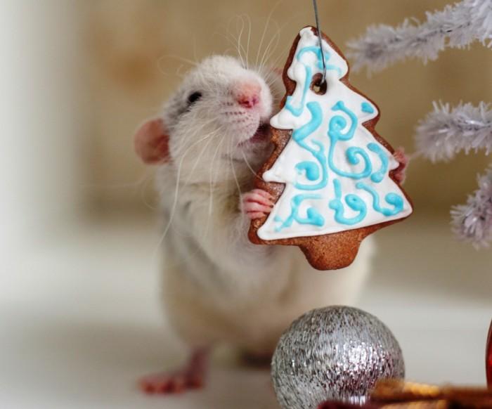 Красивые картинки с крысой