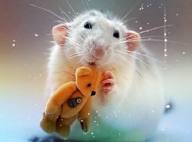 Стильные прикольные картинки с новогодними крысами и мышками