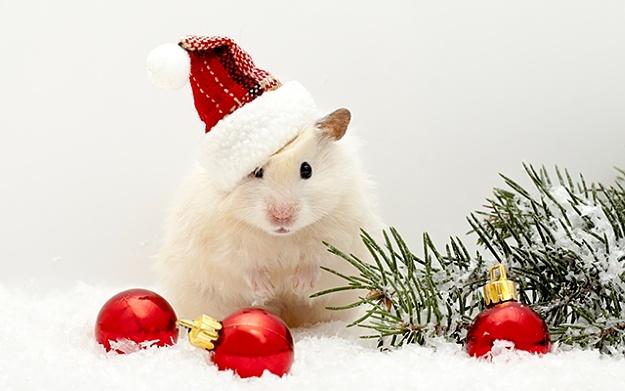 фото картинки с наступающим новым годом с мышкой тех пор