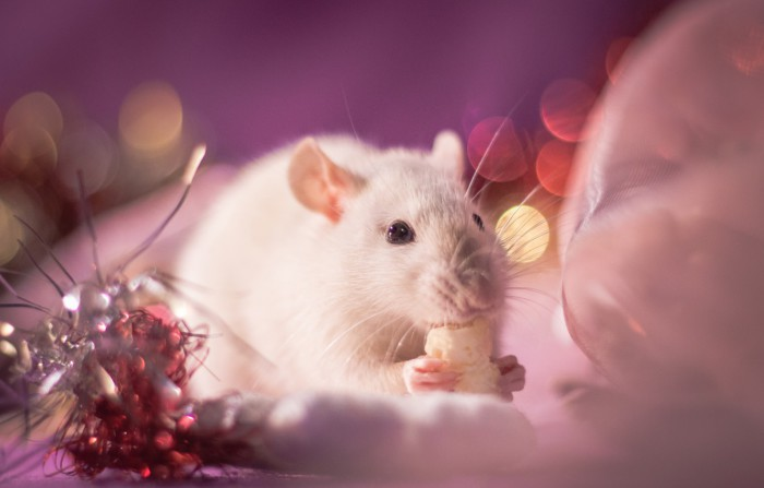Новогодние картинки с мышками и крысами